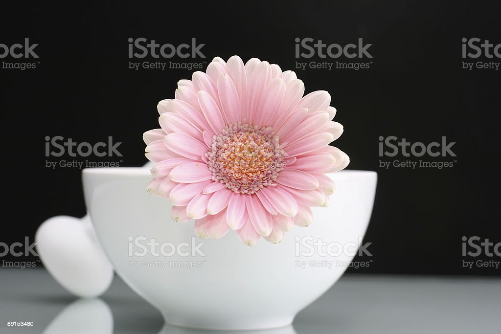 Pink Gerbara with Mortar Center stock photo
