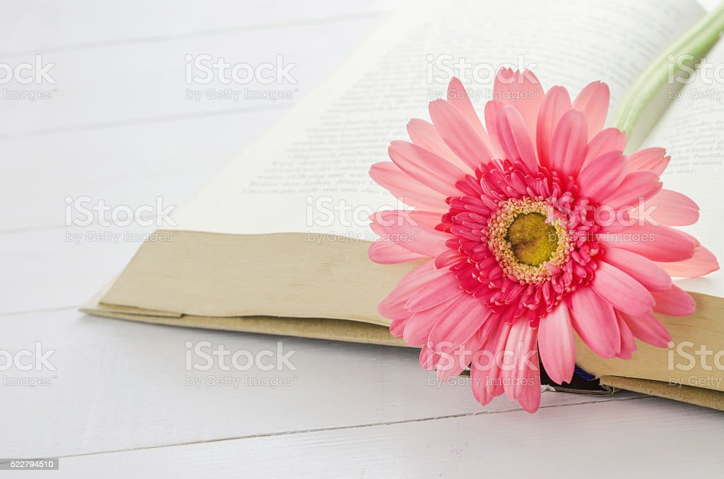 Pink Gerbera daisy flower at opened book stock photo