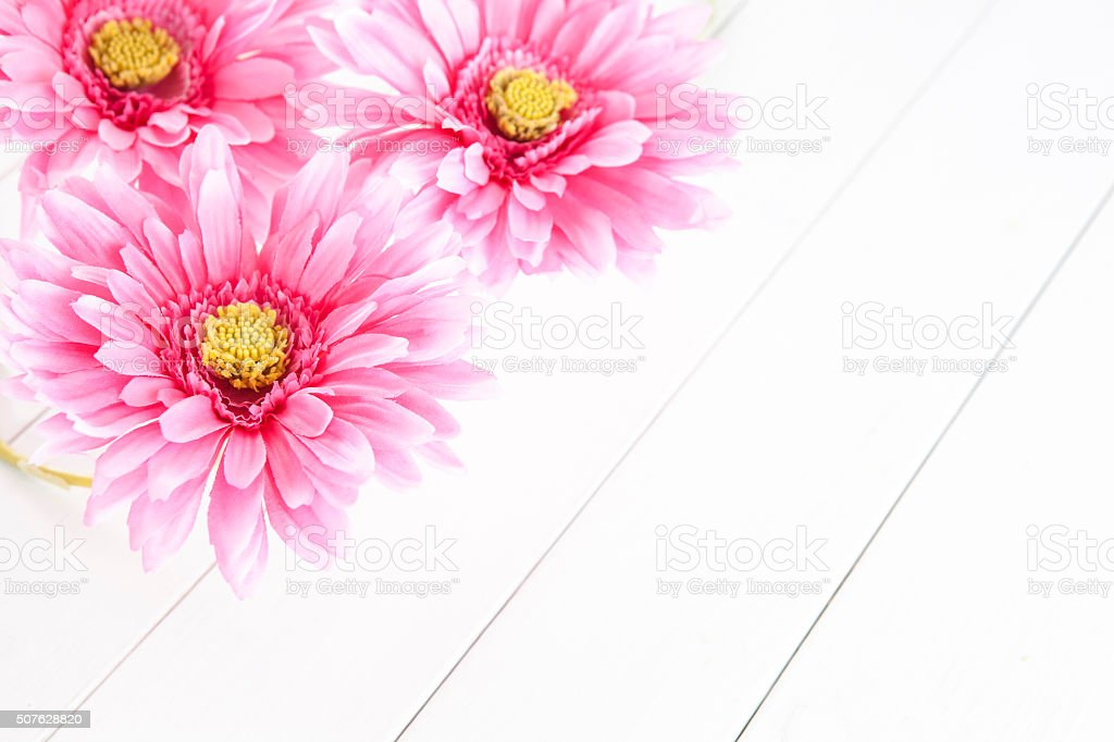 pink gerbera flowers on white background stock photo