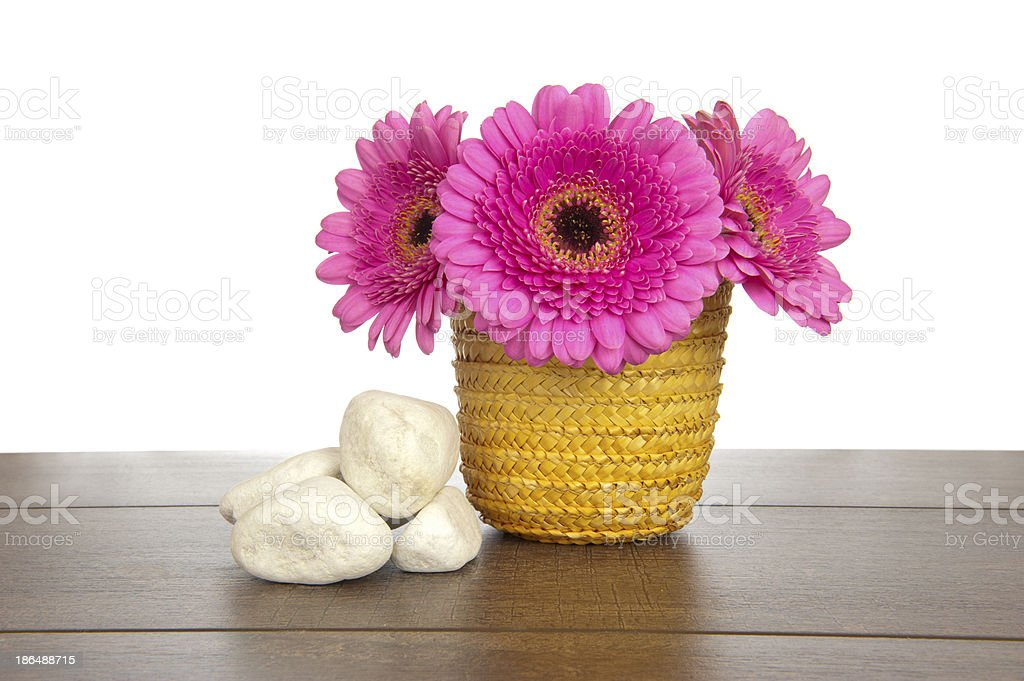 Pink Gerbera in yellow basket with white rocks royalty-free stock photo