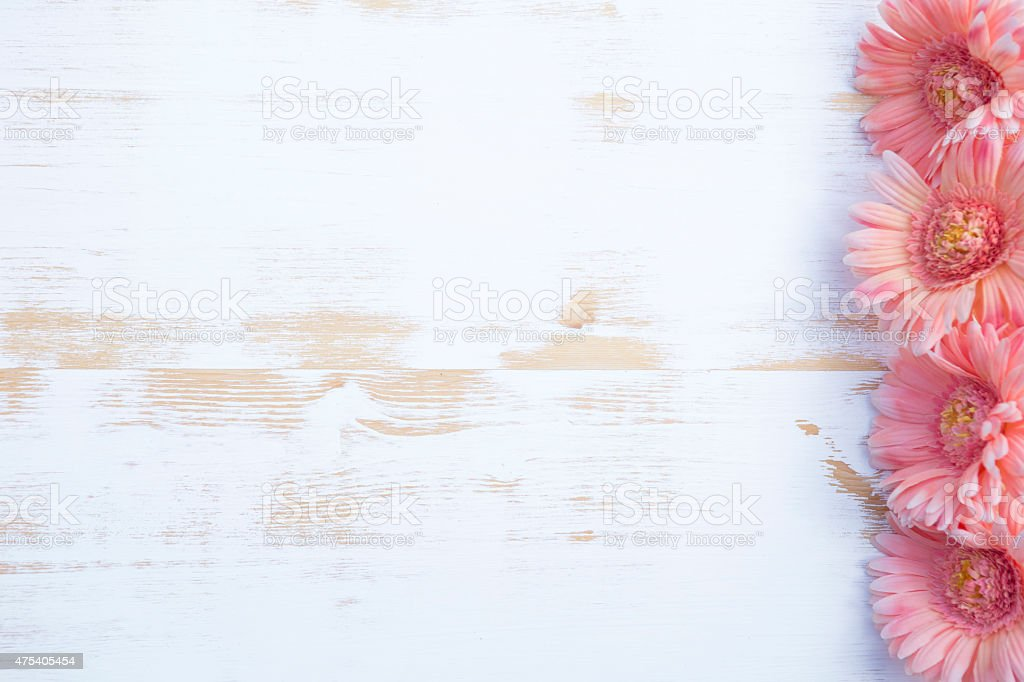 pink gerbera on white rustic wooden background stock photo