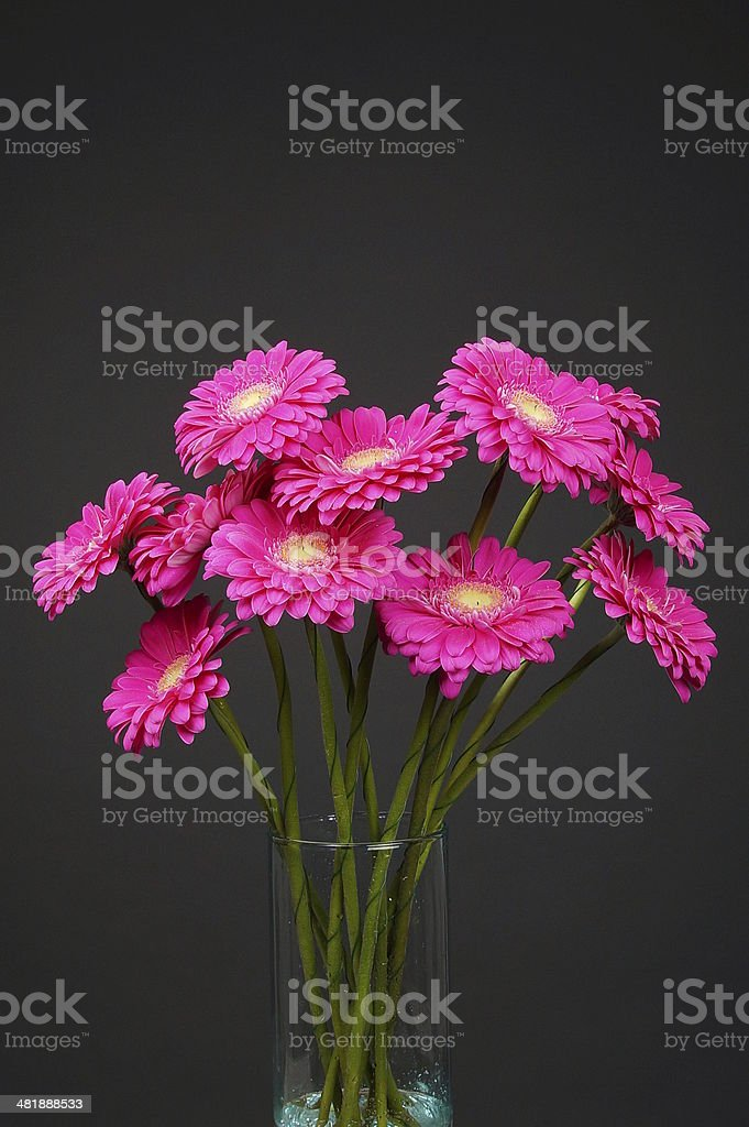 Pink gerberas at vase royalty-free stock photo