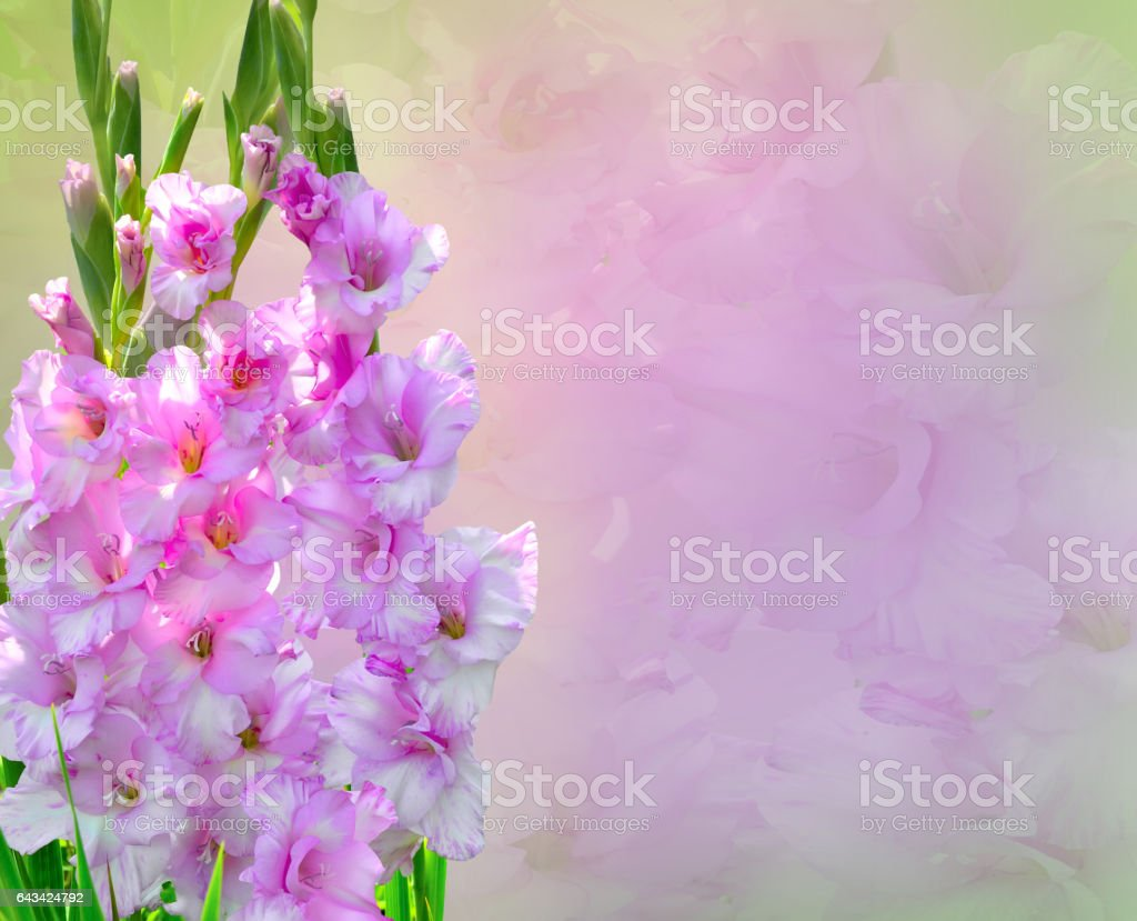 Pink Gladiolus Flowers Bouquet stock photo