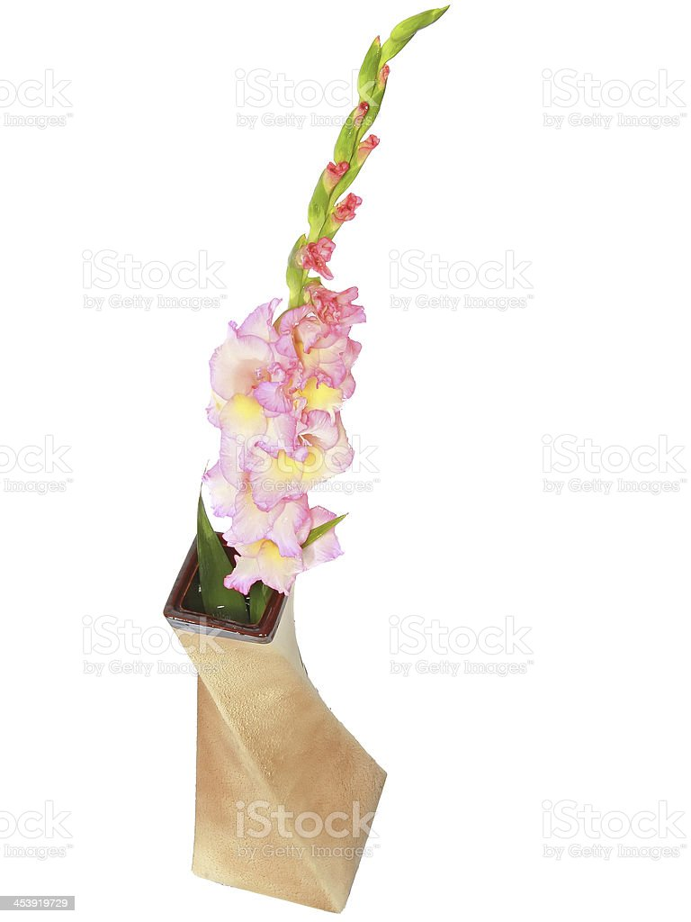 Pink gladiolus in vase . Isolated royalty-free stock photo