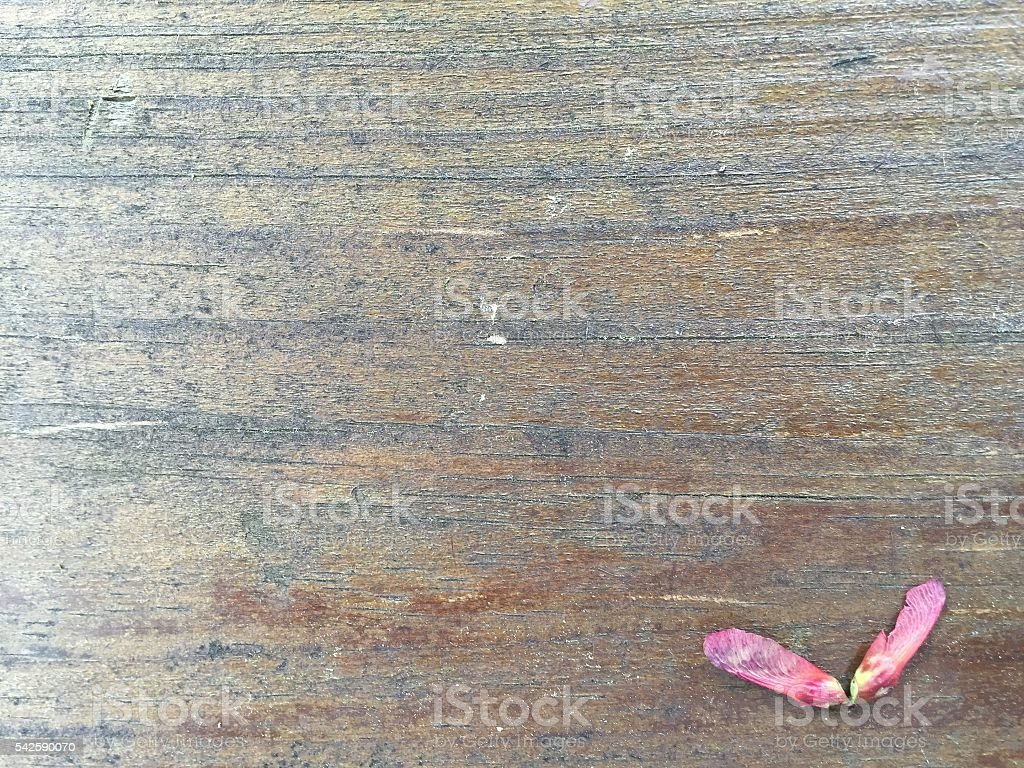 Pink Helicopter Seed stock photo