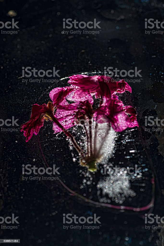 Pink in black stock photo