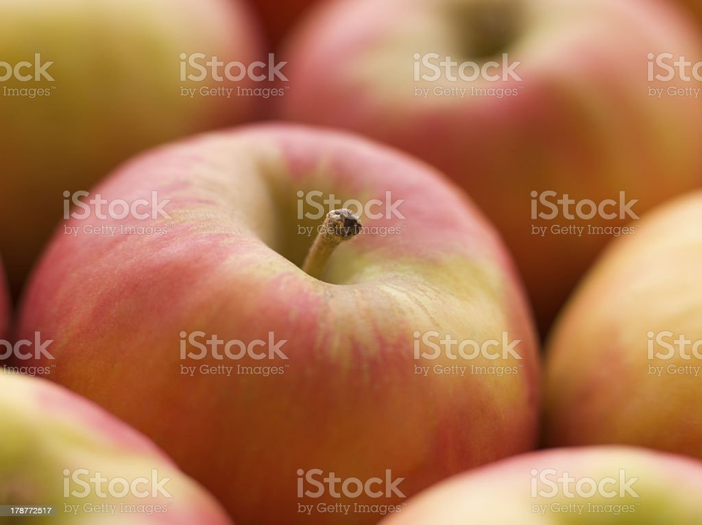 Pink Lady Apples royalty-free stock photo