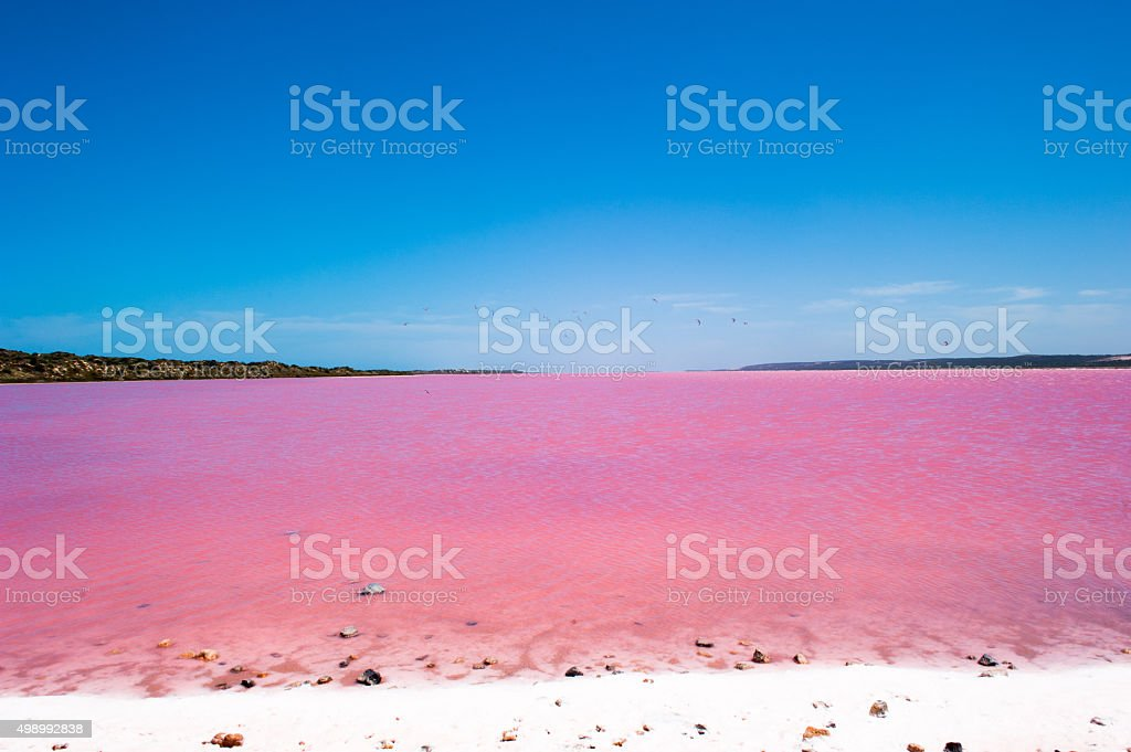 Pink Lake Australia Birds stock photo