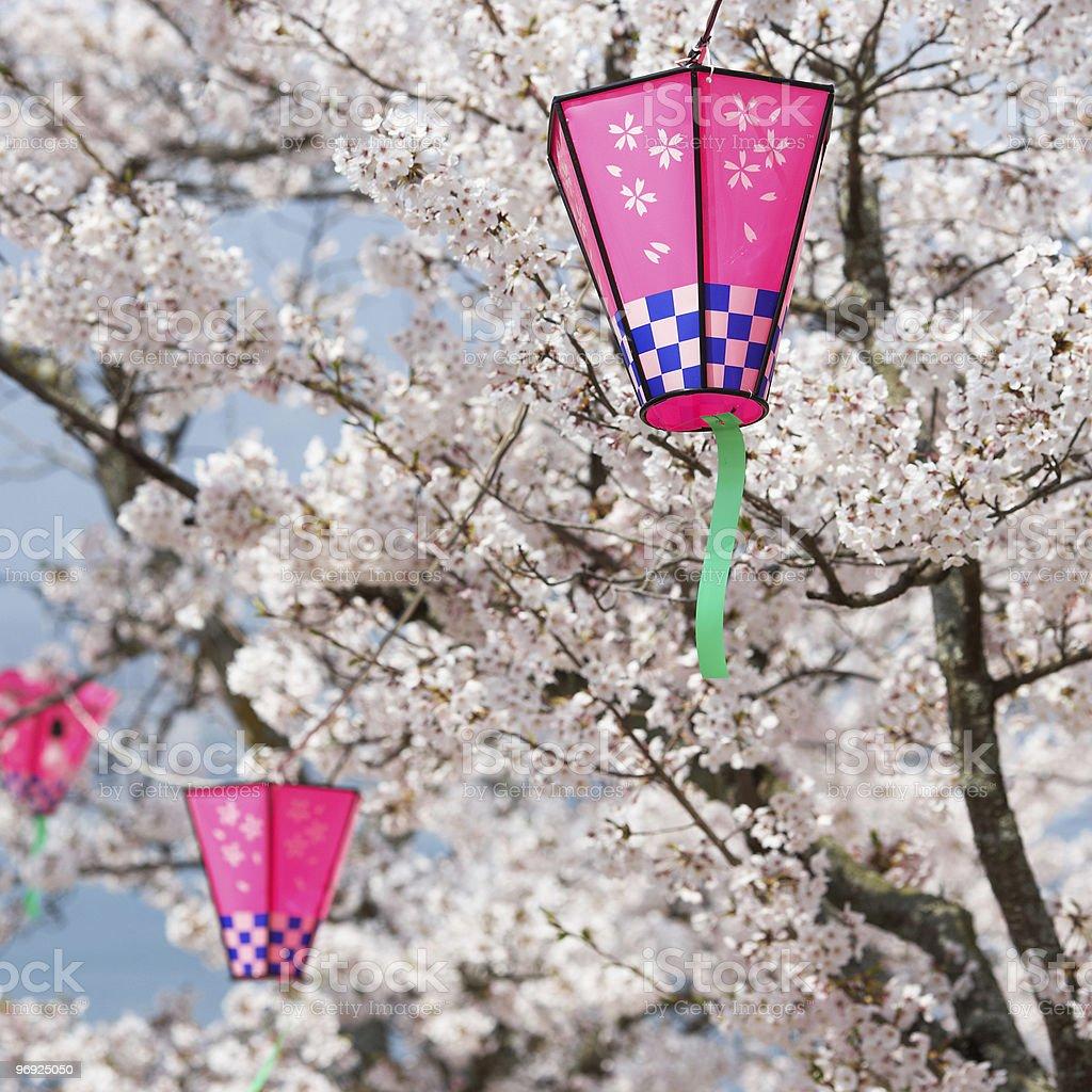 Pink Lanterns At Cherry Blossom royalty-free stock photo