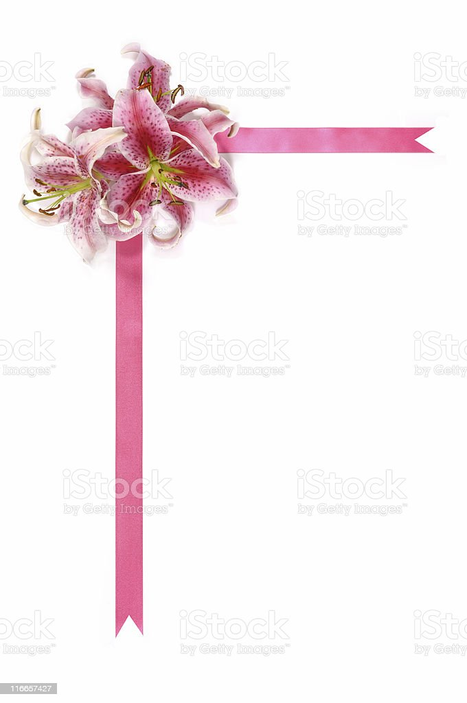 Pink lilies with ribbon royalty-free stock photo