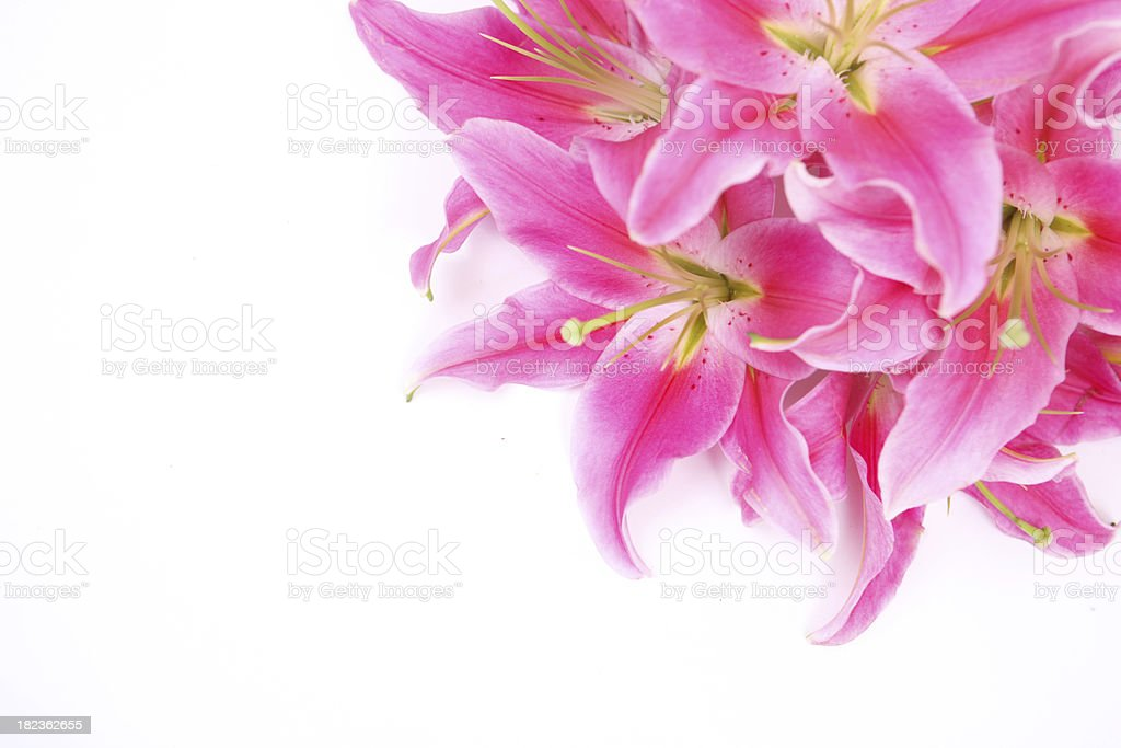 Pink Lily Corner royalty-free stock photo