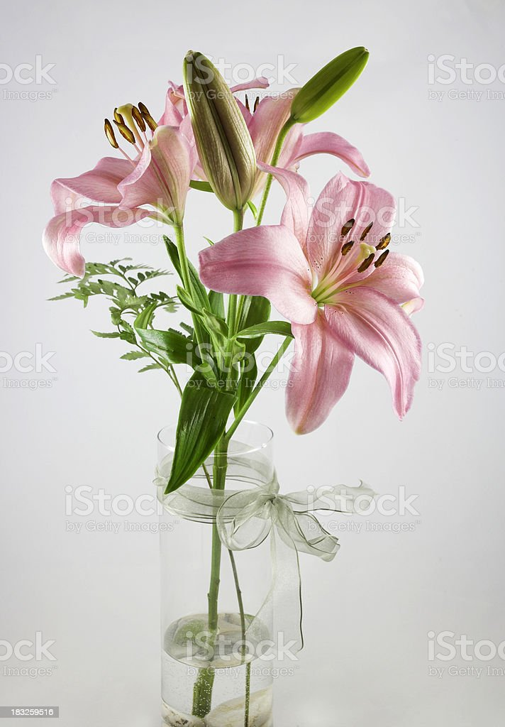 Pink Lily in Clear Vase stock photo