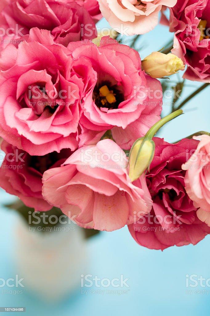 Pink Lisianthus flowers stock photo