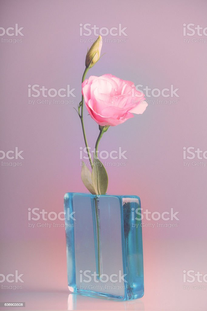 Pink lisianthus in blue vase stock photo