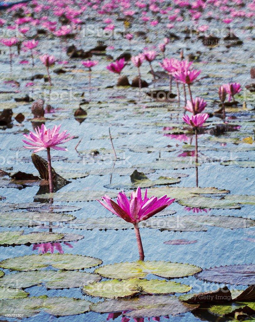 Pink lotus in lake at Udon thanee royalty-free stock photo