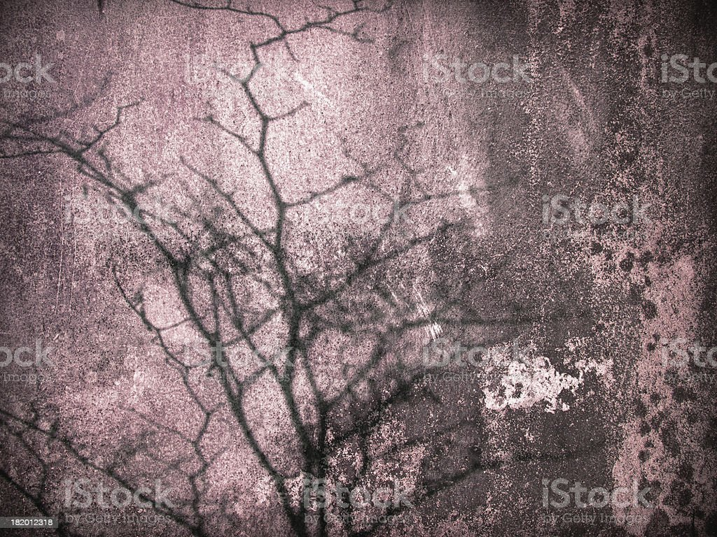 pink old wall tree shadow royalty-free stock photo