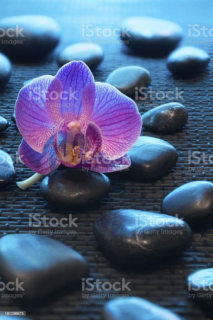 pink orchid and black stones on mat - blue light royalty-free stock photo