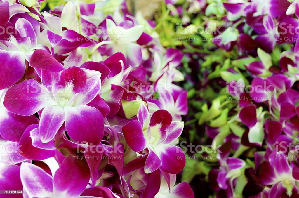 Pink Orchid Bouquets Close-Up royalty-free stock photo