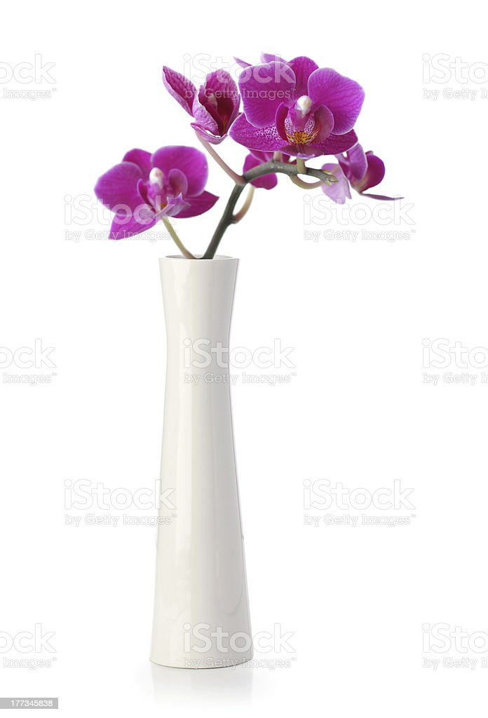 Pink Orchid flower in white vase royalty-free stock photo