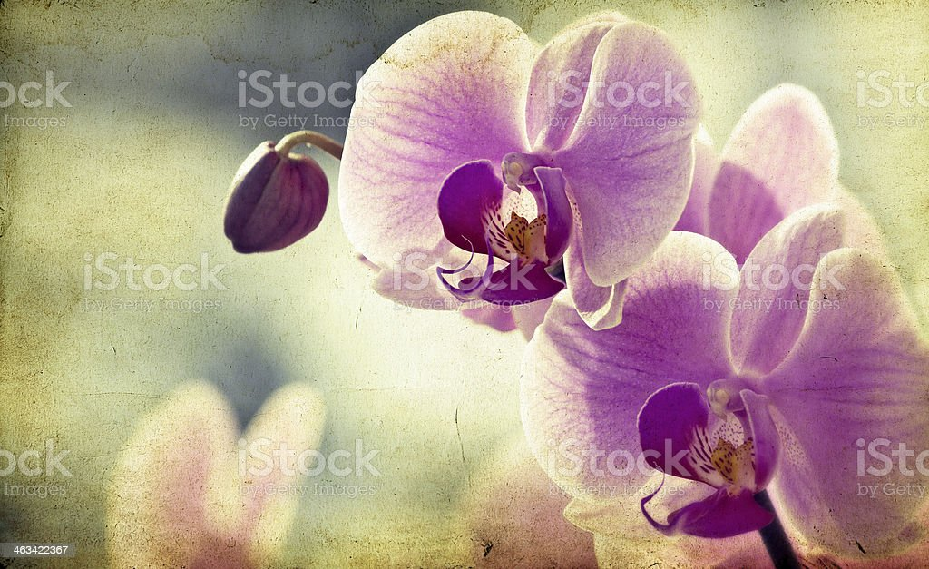 Pink orchid on vintage background royalty-free stock photo