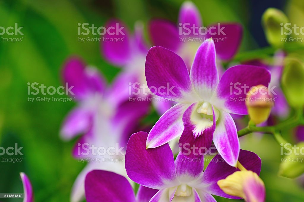 Pink Orchid Petals stock photo