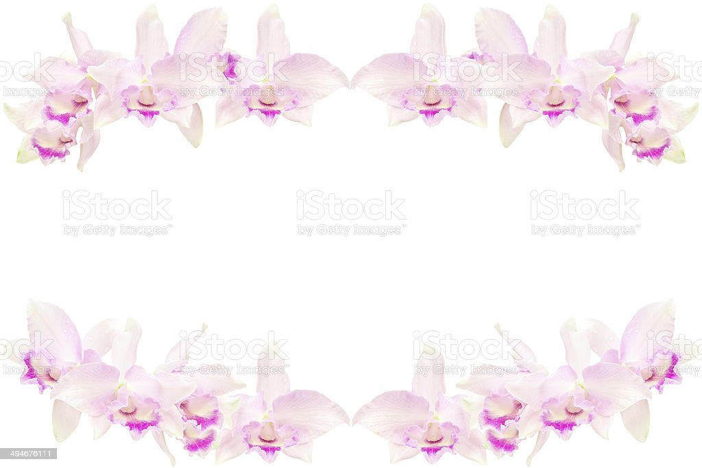 Pink orchids royalty-free stock photo
