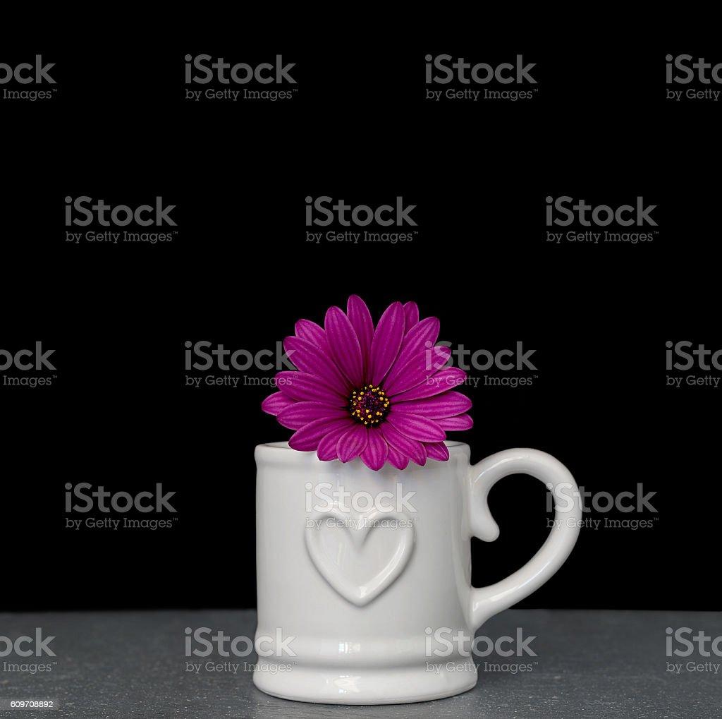 Pink osteospermum (daisy) in white mug on black background stock photo