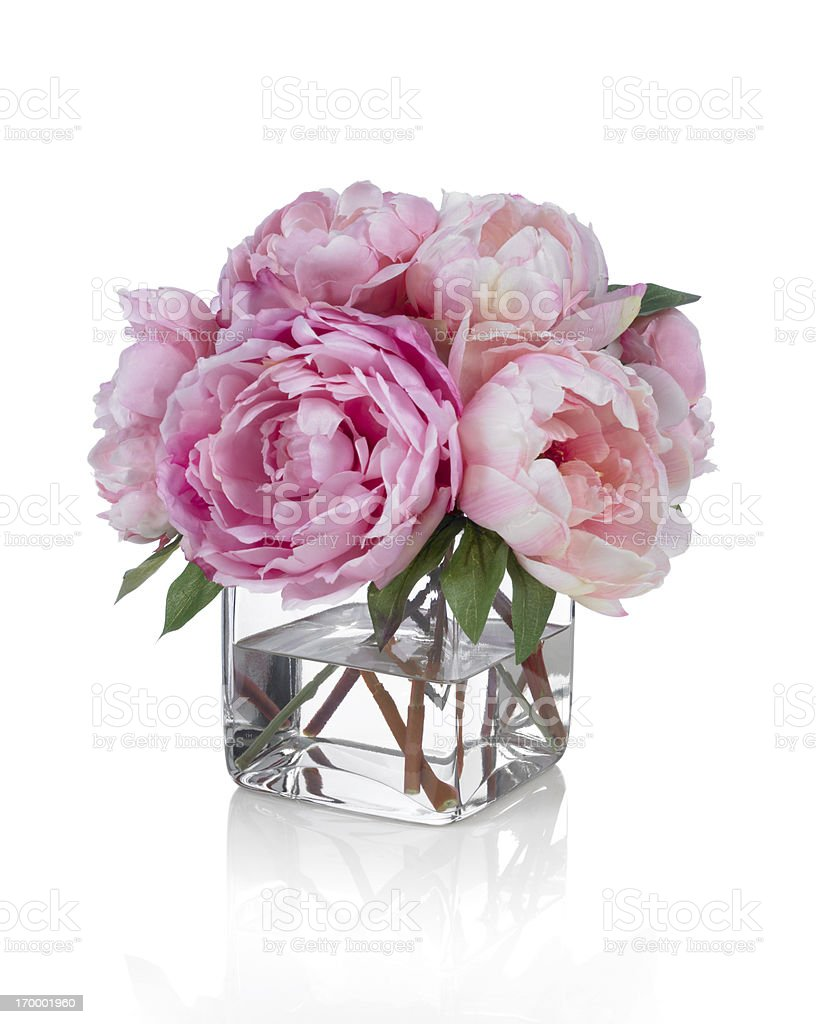 Pink Peonies on a white background stock photo