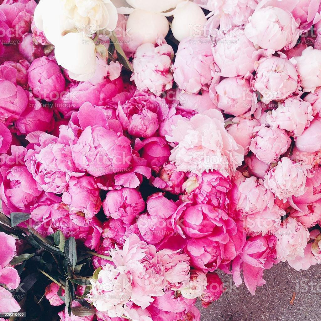 Pink peonies stock photo