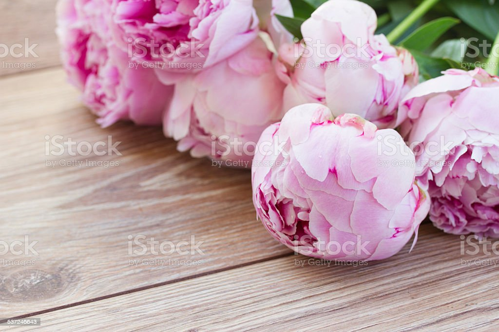 peony pictures, images and stock photos - istock