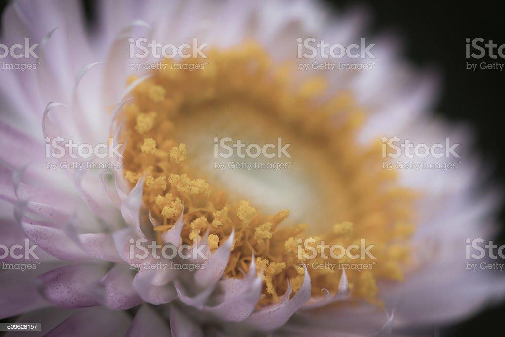 pink petal flower stock photo