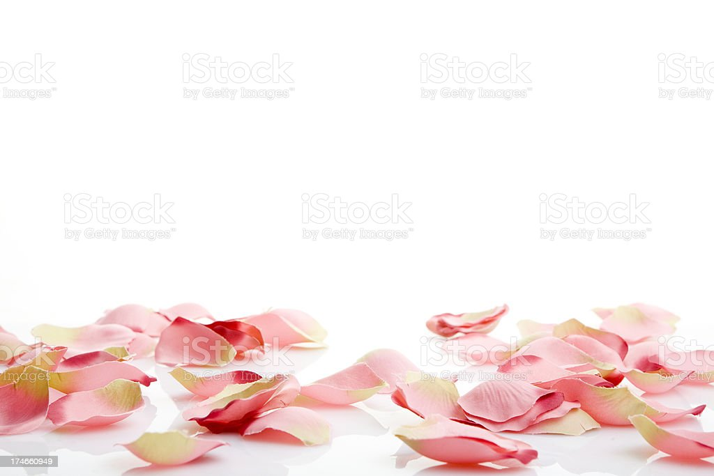 pink petals background stock photo
