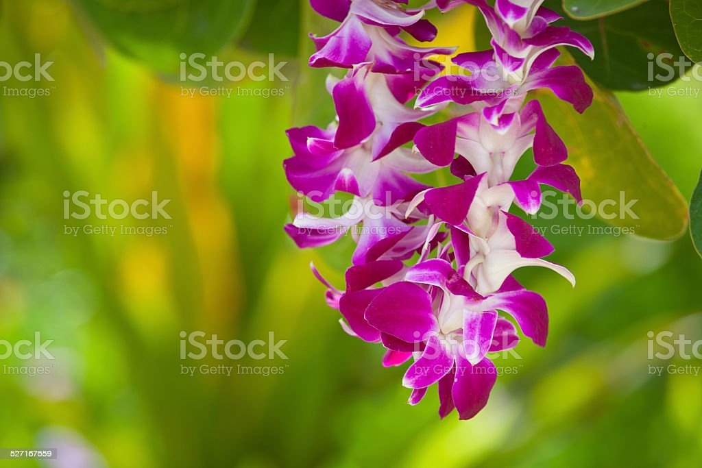 Pink Petals in Lei stock photo