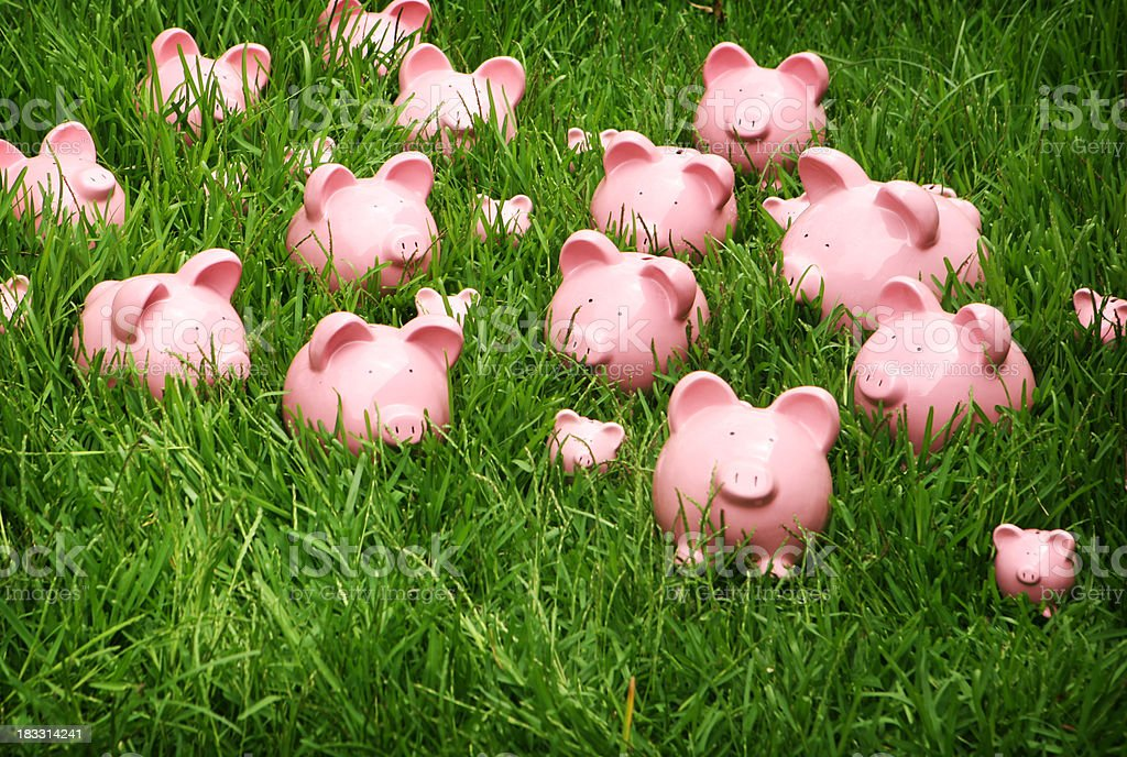 Pink Piggys in Green Grass royalty-free stock photo