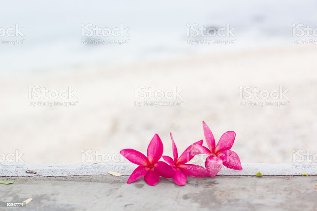 Pink plumeria on the beach stock photo