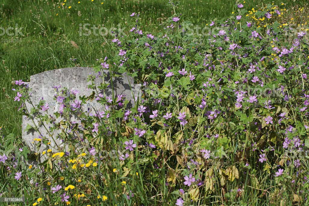Wildflower graveyard gravestone stock photo