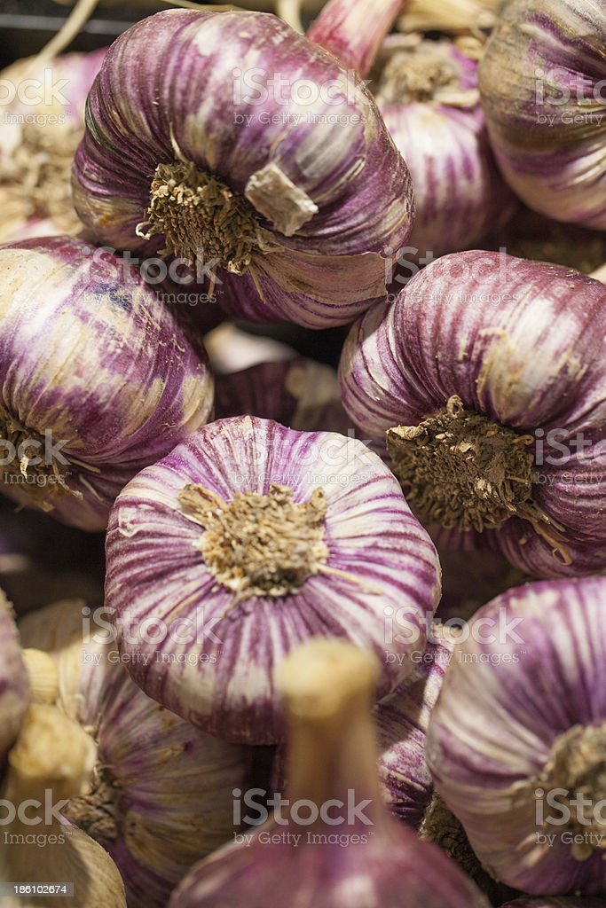 pink red French garlic bulbs royalty-free stock photo