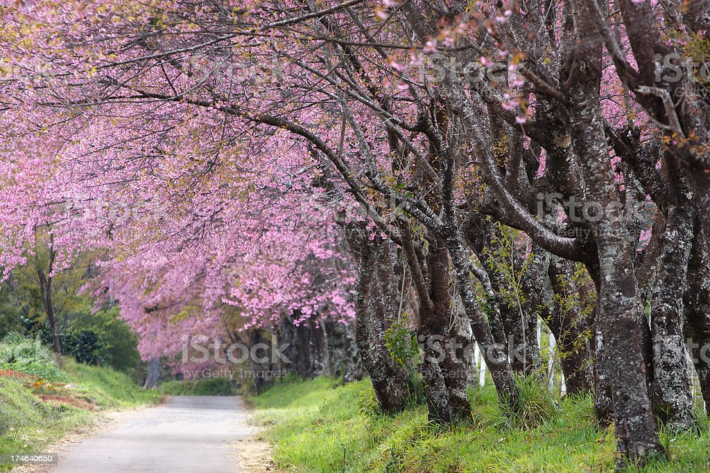 Pink road royalty-free stock photo