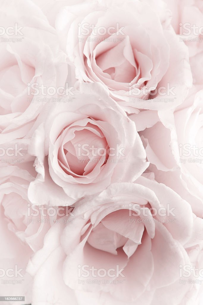Pink Romance royalty-free stock photo