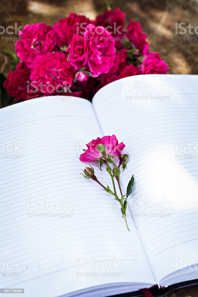pink rose and diary stock photo