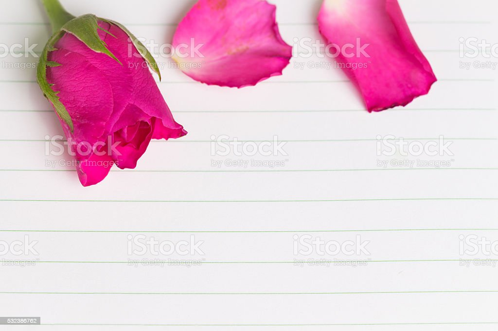 Pink rose and diary,valentines day stock photo