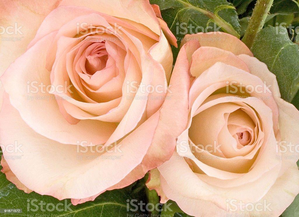 Pink Rose Arrangement royalty-free stock photo