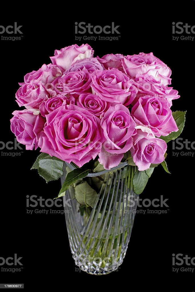 Pink rose flowers royalty-free stock photo