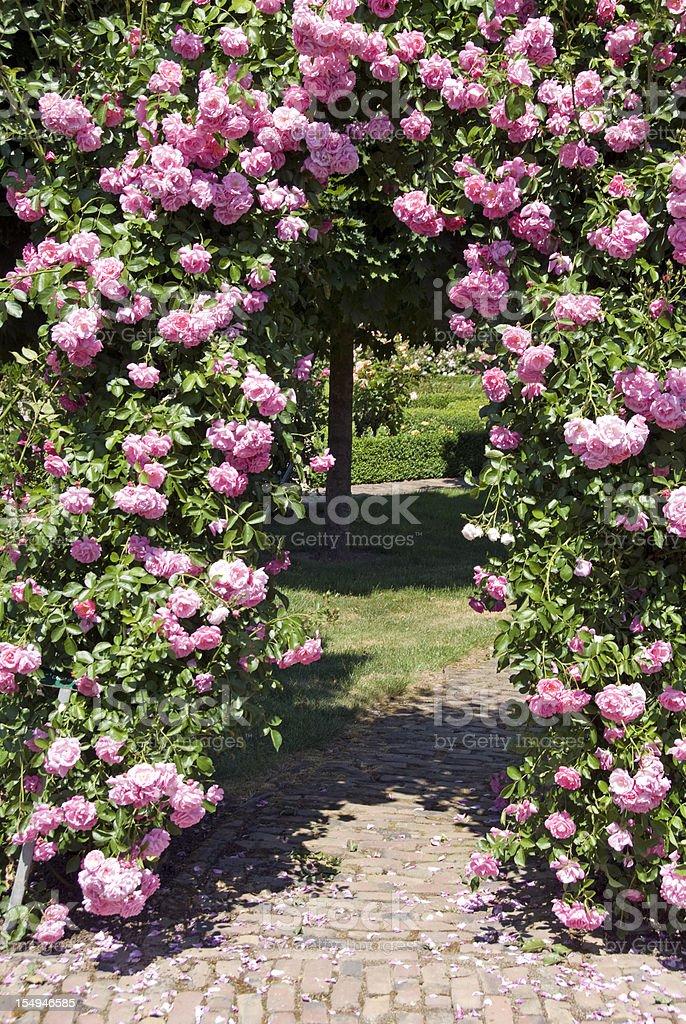 Pink Rose Gate stock photo