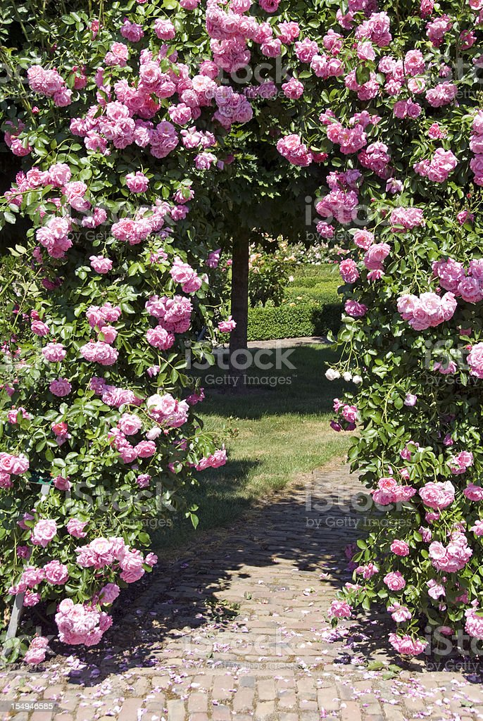 Pink Rose Gate stock photo