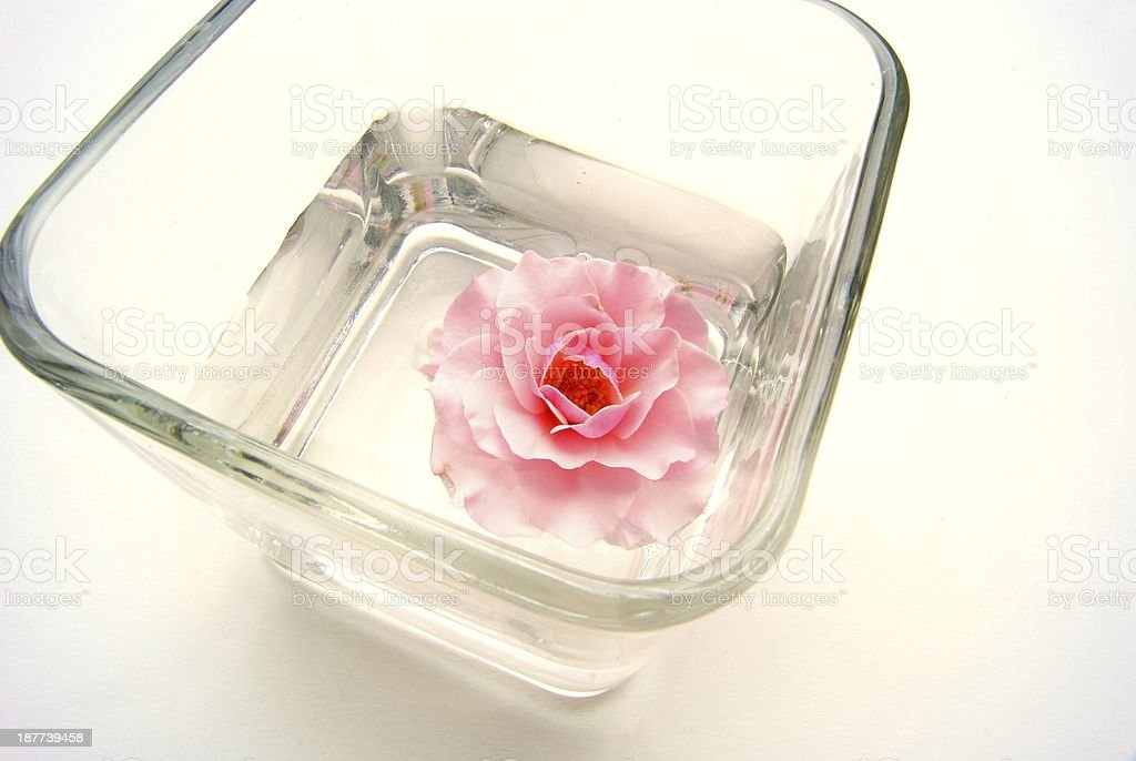 Pink rose in a jar royalty-free stock photo