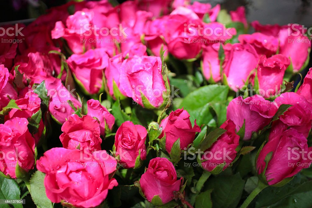 pink rose in market stock photo