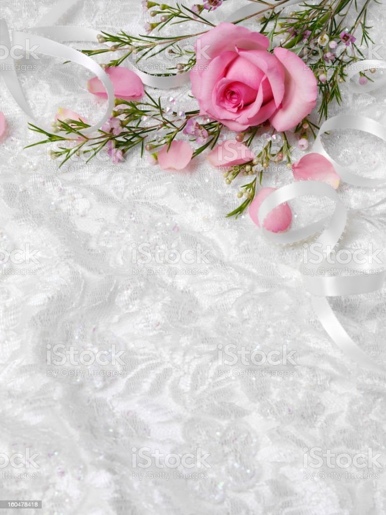 Pink Rose on a White Lace Background royalty-free stock photo