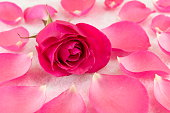 Pink rose on rose petals and bath salt