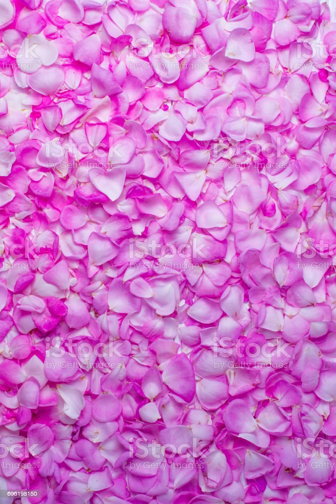 Pink rose petals. Valentine's day background. Flat lay, top view stock photo